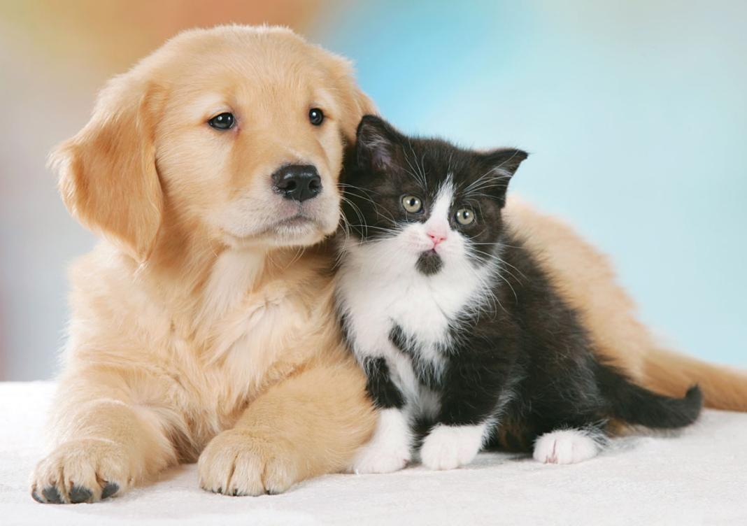 Robinson Pet Shop Cane Gatto