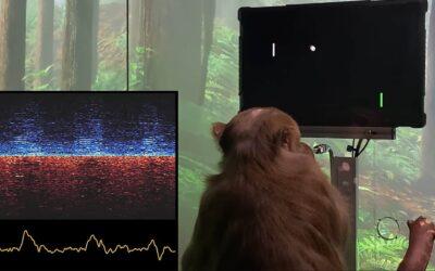 Neuralink fa videogiocare una scimmia solo con il pensiero: la nuova scommessa di Musk